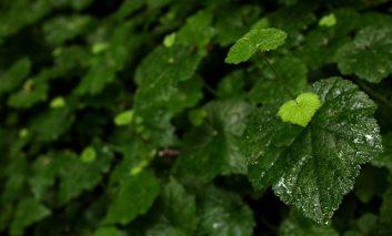 شرایط رشد و پرورش تولمیای جذاب
