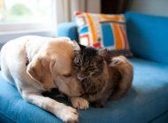 چگونه سگ و گربهتان را به هم معرفی کنید؟