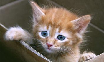 چند اسم بامزه برای گربه نر شما!