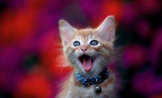۱۰ قدم برای داشتن گربهای شادتر