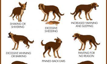 ۱۰ نشانه که مشخص میکند سگتان استرس دارد