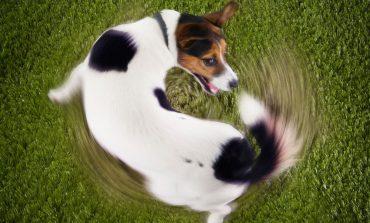 چرا سگم دمش را دنبال میکند؟!