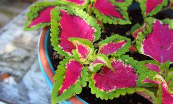 گیاهان باغچهای که درون خانه هم رشد میکنند!