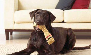 ۷ بازی که سگتان عاشقشان میشود!