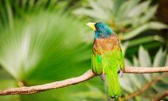 دم پرندهها چه کارهایی انجام میدهد؟