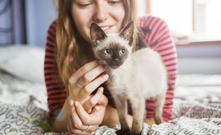 گربهها چطور عشقشان را به ما نشان میدهند؟