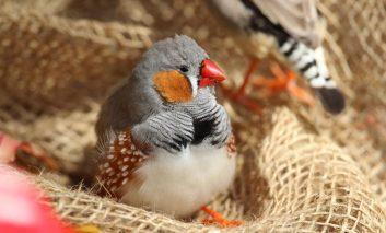 ۵ پرنده آرام برای افراد بیحوصله