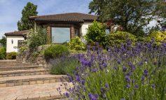 ۱۰ گلی که به شما کمک میکنند خانهتان را بفروشید!