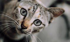 ۱۰ چیز که فقط صاحب گربه راجع به او میداند