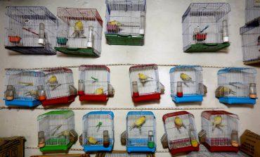 بازار داغ پرندهفروشی در افغانستان