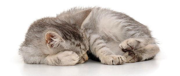 چرا گربهام انقدر میخوابد؟!