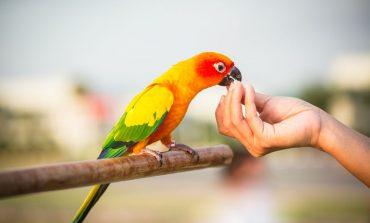 چرا پرنده حیوان خانگی مناسبی برای شما است؟