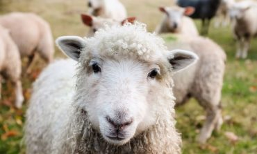 تور بازدید از بامزهترین حیوانات مزرعهای!