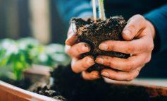 از کجا بدانیم ریشه گیاهمان جایی برای رشد در گلدان ندارد؟