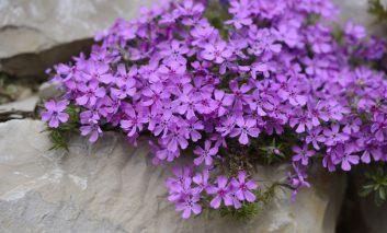 گلهای زود هنگام بهاره، برای بیدار کردن باغچهتان