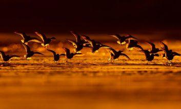 مسابقه برترین عکاس پرندگان در سال ۲۰۱۸