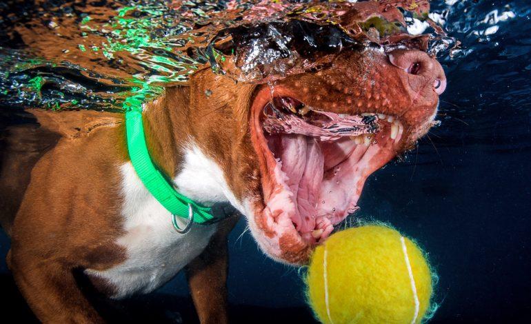 تولهسگها؛ شکارچیان ماهر و بامزه زیر آب
