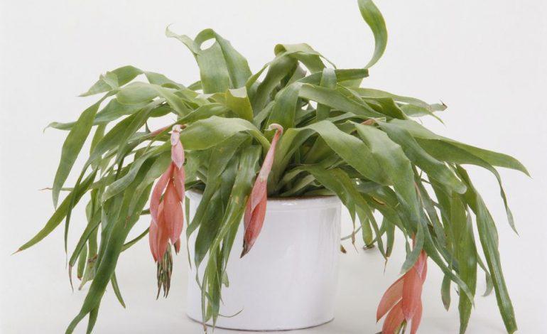 بهترین گیاهان برای آویزان شدن!