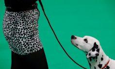 """کرافتز ۲۰۱۸؛ مسابقه سگها و تلاش برای بردن جایزه """"بهترین سگ سال"""""""