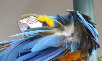 حقههایی ساده که میتوانید به پرندهتان یاد دهید!