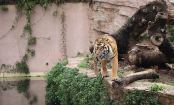 در سفر به بارسلون از باغ وحش آن غافل نشوید