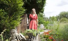 باغچه تکانی برای بهار! – قسمت دوم