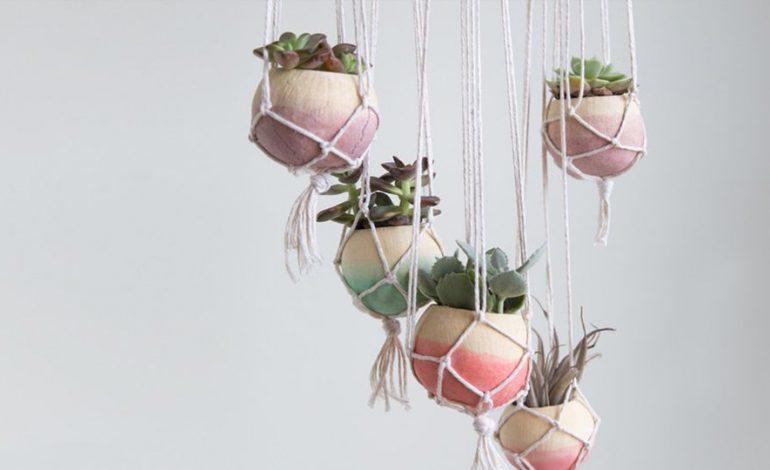 طراحیهای جدید گیاهان برای آوردن مدرینیته به خانه!