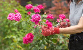 باغچه تکانی برای بهار! – قسمت اول
