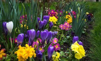 ۵ نکته برای گلکاری بهاره موفق