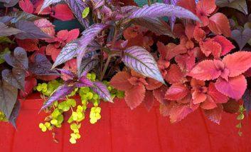 ۱۰ گیاه آپارتمانی برای کسانی که برگهایی زیبا میخواهند