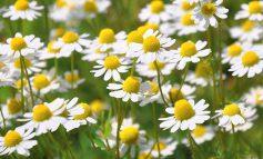 آلرژی بهاره دارید؟ از این گیاهان دوری کنید!