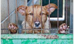 آیا حیوانات هم خودکشی میکنند؟