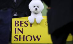 ۱۲۴مین نمایش سگ های کلاسیک!
