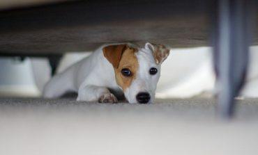 ۱۰ ترس رایج در سگها