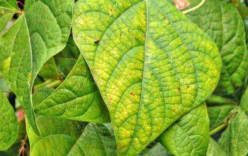 شناسایی علائم و درمان کمبود مواد غذایی در گیاهان – قسمت اول