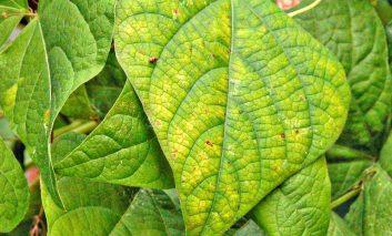 شناسایی علائم و درمان کمبود مواد غذایی در گیاهان – قسمت دوم