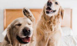 چند باور غلط راجع به سگها