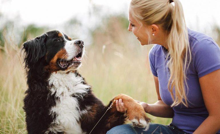 چطور به سگ دست دادن یاد دهید!