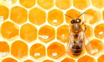 شباهت کلونی زنبور عسل با سازوکار تصمیمگیری انسان