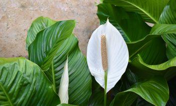 چند گیاه خانگی هیجان انگیز برای بهار