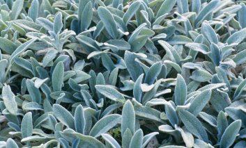 گیاهان پوشاننده زمینی که عاشق آفتاب هستند