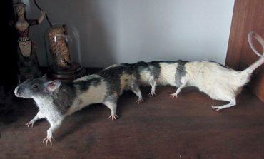 بدترین حیوانات تاکسیدرمی شده دنیا!