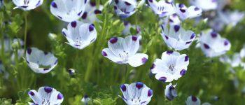۵ گل آسان که تا به اسمشان را هم نشنیدهاید