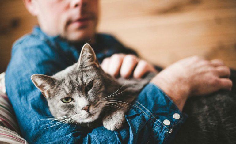 آیا گربهها هم از مرگ یکدیگر ناراحت میشوند؟