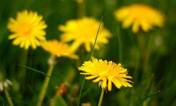 علفهای هرز بهاره را کنترل کنید