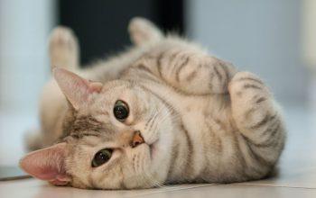 چرا گربهها این رفتارهای عجیب را انجام میدهند!