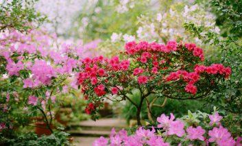 شکوفههای بهاری را به خانه آورید!