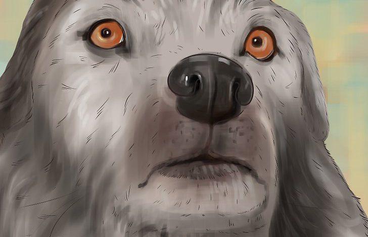 چه طور بفهمیم سگی ترسیده است؟