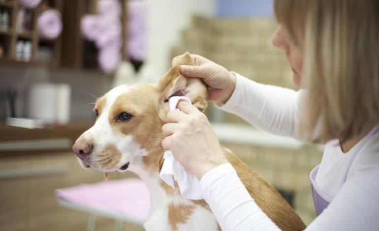 چه طور گوشهای سگمان را تمیز کنیم؟