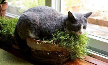 گربهتان را دوست دارید؟ این کار را برایش انجام دهید!